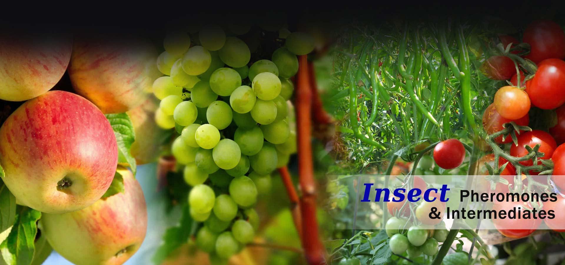 Insect Pheromones and Intermediates